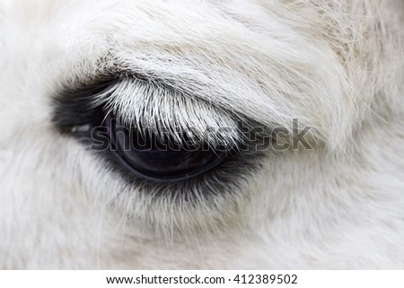 Macro shot of a horse eye. The beauty of animals in the wild.. - stock photo
