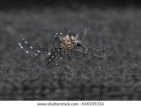 macro shot of a mosquito over cloth fiber against black background