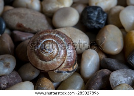 Macro shot of an old, weathered, snail shell, long abandoned. Parts of the shell have started to chip and fall off.