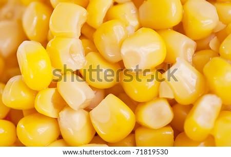 macro shot of corn used for ethanol fills the frame - stock photo