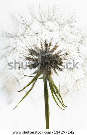 Macro shot of flower with soft flowerhead full of seeds