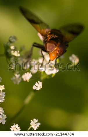 macro shot of fly on a white flower