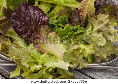 Macro shot of freshly harvest Lola Rosa lettuce, mustard greens, buttercrunch, and assorted lettuce horizontal in a colander wire basket - stock photo