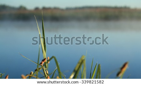 Macro shot of grass against the water background - stock photo