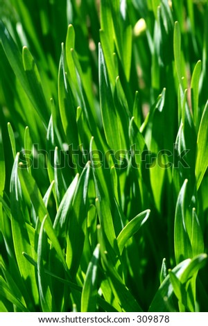Macro shot of green sunlit grass