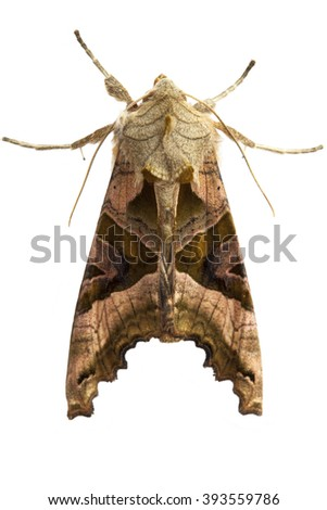 Macro shot of moth isolated over white - stock photo