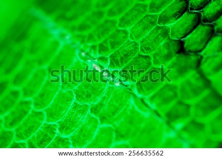 Macro shot of real snake skin, background, wallpaper - stock photo