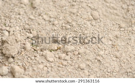 Macro shot of sand as a background - stock photo