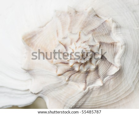 macro shot of seashell pattern - stock photo