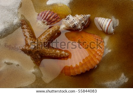 Macro shot of shells on a beach covered by oil from offshore spill - stock photo