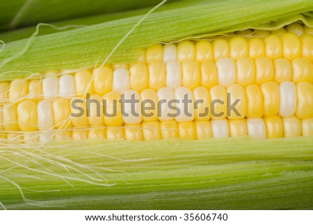 Macro shot of summer corn in the stalk showing the details of the kernels - stock photo