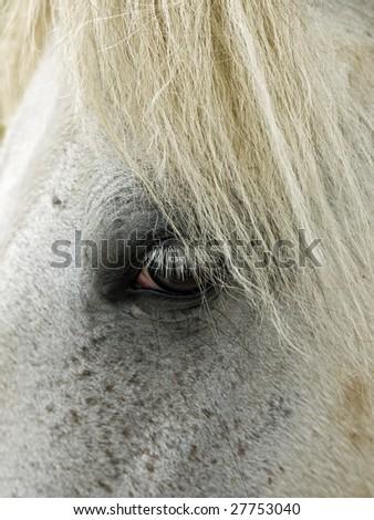 Macro shot of the long white eye lashes of a beautiful stallion. - stock photo