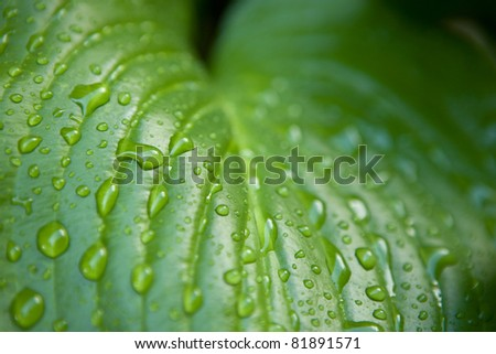 Macro shot of water drops on the leaf - stock photo