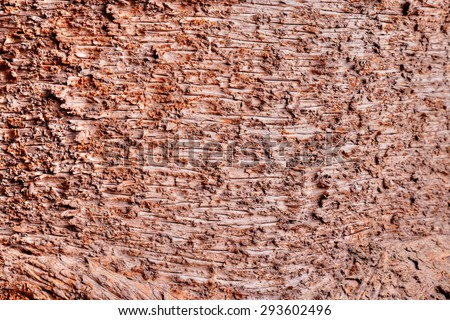 Macro shot showing detail of an old tree bark - stock photo
