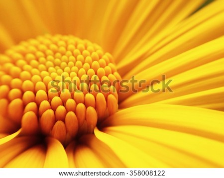 Macro shot yellow flower background - stock photo