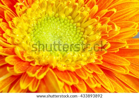 Macro shot yellow flower background. - stock photo