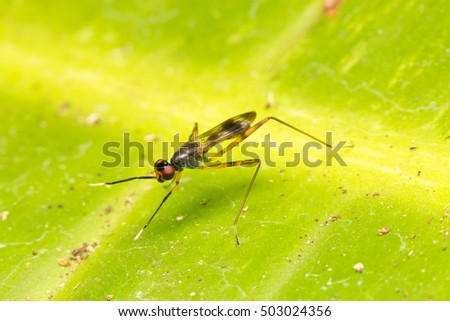 Macro small insects. Small flying insects perch on leaves.