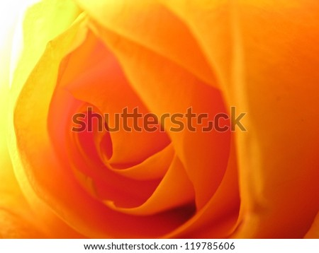 Macro soft focus shot of a rose for background image use - stock photo
