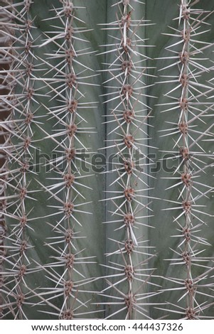 macro spines of a cactus as a texture - stock photo