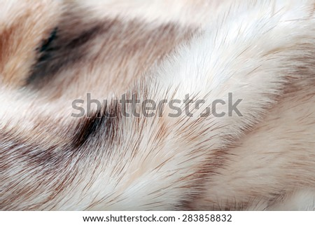 Macro texture of fur mink light color studio