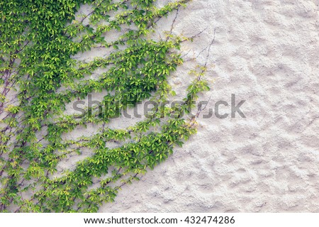 Macro texture of green ivy on wall with textured plaster - stock photo