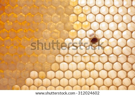 Macro view natural, organic honeycomb cells with natural raw honey. soft focus photo.