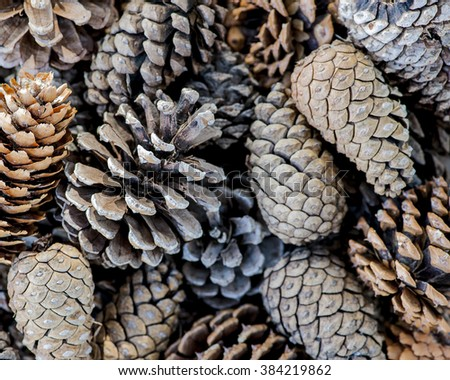 Macro view of a group of pine cones background
