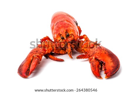 Macro view of cooked red lobster isolated on a white background - stock photo