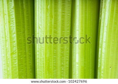 Macro view of fresh green stems of celery