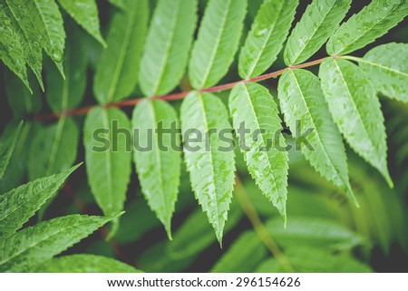 Macro view of tropical green fern background, shallow DOF - stock photo
