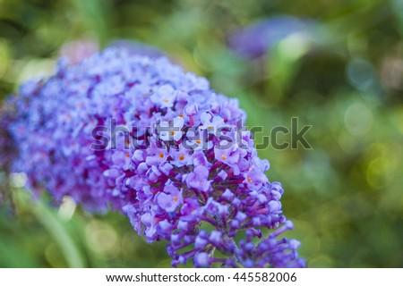 Macro Violet flower on green background