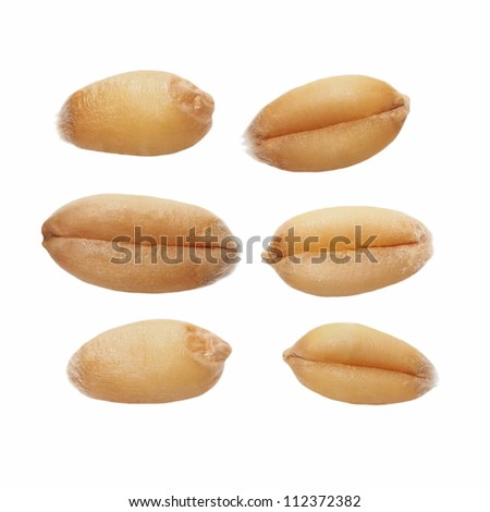 Macro wheat grain isolated on white background