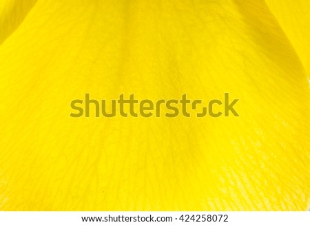 Macro Yellow Flower Background