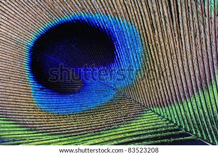 Macrophotograph of a peacock's feather. Diagonal composition, can be used in any orientation. - stock photo