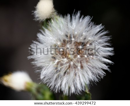 Macrophotography of a wild flower