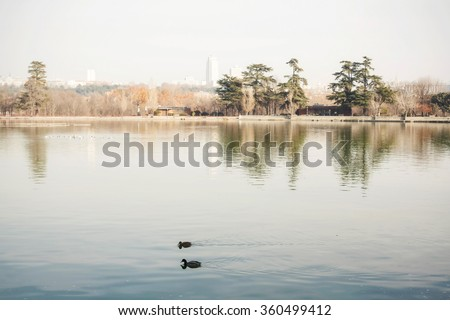 "Madrid ""Casa de Campo"" landscape. The lake with its reflex and two ducks swimming."
