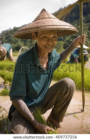 MAE HONG SON , NORTHEM THAILAND - JULY 19, 2005 :  July 2005, In the province of Mae Hong Son, north of Thailand close to Myanmar border. Thai farmer men working in the rice field.  - stock photo