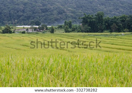 Mae Kalng Luang , Thailand Terraced Rice Field - stock photo