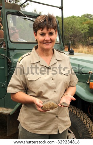 MAGALIESBERG, SOUTH AFRICA - October 14: Dehorning of rhinos in Askari Game Lodge on October 14, 2015 in Magaliesberg, South Africa.  Dep. of Nature Conservation rep. with pieces of horn. - stock photo