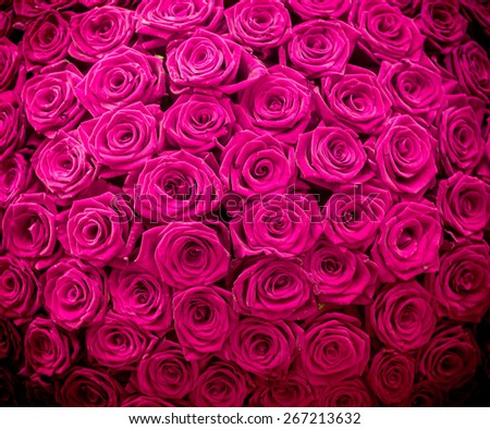 Magenta natural roses background - stock photo