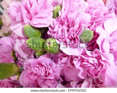 Magenta ruffled carnations