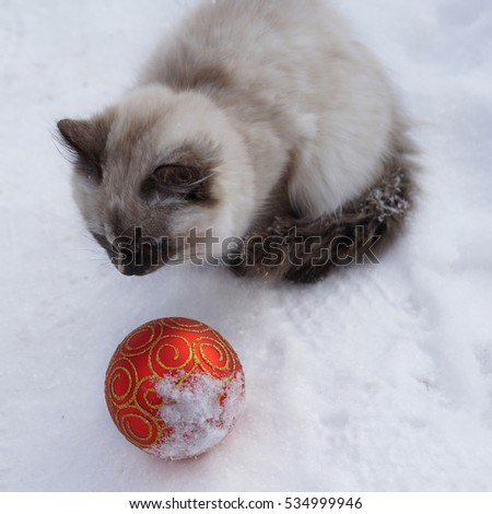 Magic cat with red christmas ball on snow background