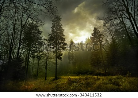 Magic dark forest. Autumn forest scenery with rays of warm light. Mistic forest. Beskid Mountains. Poland - stock photo