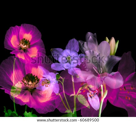 magic flowers on black background - stock photo