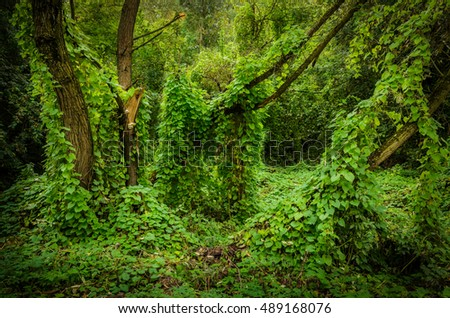 magic forest clearing with trees overgrown with lianas