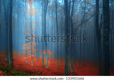 Magic forest in a foggy day during autumn - stock photo