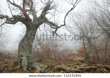 Magic forest in the fog - stock photo