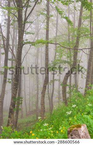 Magic forest with fog in the summer season - stock photo