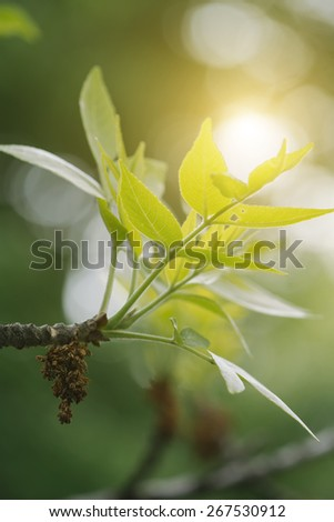 Magic green forest with lush foliage and fresh  green leaves - stock photo