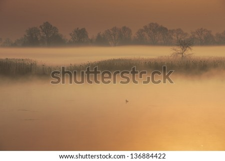 Magic landscape with mist on the lake at sunrise - stock photo